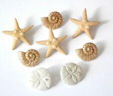 Glitter Beach / Dress It Up Jesse James / Starfish ~ Sand Dollars ~ Conk Shells