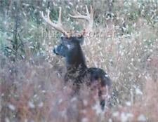9 Point Buck in Tall Grass, 11x14 Ken Goss signed photograph