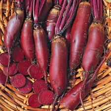 "Beetroot /""Cylinder/"" 5 GRAMS APPROX 500 SEEDS."