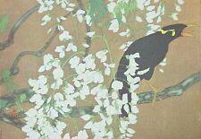 Mynah Bird, Wisteria : Rakusan - Old Art Print of a Japanese Woodblock / Woodcut
