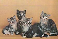 The Nonconformist, 5 Cute Kittens, Cat Baby Alert, OMG, Pets --- Animal Postcard