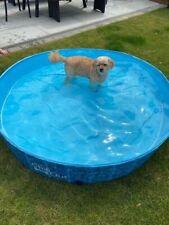 Dog Splash and Fun PVC Paddling Pool Large