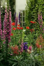 TRADITIONAL ENGLISH COTTAGE GARDEN SEEDS thro 'n' gro mix * NO SAND ADDED