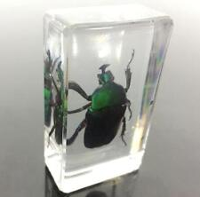 Handmade chinese green beetle paperweight Specimen Taxidermy