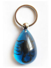 Real BLACK SCORPION Keychain Ring  Genuine INSECT BLUE  Key Chain Keyring Lucite