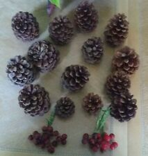 14 Pine Cones, Natural (Preowned)