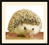 Baby Hedgehog, Exclusive Cross Stitch Kit