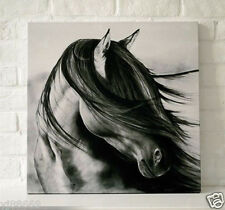 Abstract Hand Painted Oil Painting Canvas Wall Decor Black White Horse No Frame
