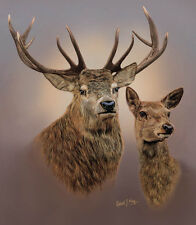 Limited Edition of 50 Red Deer Stag & Hind Prints by Robert J. May