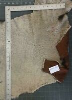 Hair On Hide Goatskin Leather Pelt Curly Soft Thin Reversible Beige  #AY1104-05