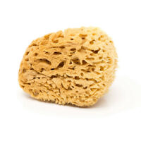 BodyCare Sea Sponge - Natural Honeycomb Sponge In A Free Organic Cotton Gift Bag