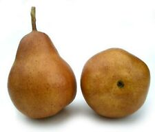 Artificial Bartlett Pear, Box of 12 Fake Pears 5 Color Choices Life-sized Pears