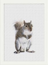 Animal Print Red squirral Fauna Selvatica Effetto Tela Stampa Muro ARTE Per la casa,