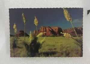 1970s Yucca Spanish Bayonet B1873 Postcard