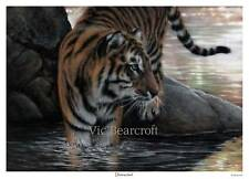 'Distracted'. Limited Edition Tiger Print.