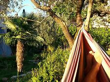 5 x Trachycarpus fort. Jungpflanzen winterhart bis -17°C Palme Hanfpalme Frost