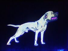 Gr Ch Yellow Glow in the Dark American Pit Bull Terrier Pitbull Game Dog Art