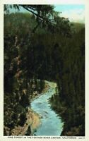 Pine Forrest Feather River Canyon Oroville California Bird's Eye View Postcard