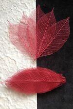 25 Skeleton Leaves Cranberry Red see through leaf Burgundy Wedding cards Medium