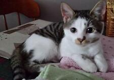 Sponsor a Cats Protection Cat for One Year - Stevie