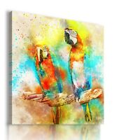 PAINTING DRAWING PARROTS BIRDS VISUAL ART PRINT Canvas Wall Picture  R4 MATAGA