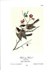Black Cap Titmouse Vintage Bird Print by John James Audubon ABONA#134