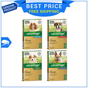 ADVANTAGE for Dogs 6 Pipettes All Sizes Monthly Flea Protection for dogs