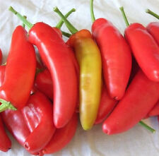 Heirloom HUNGARIAN WAX HOT Pepper 200 SEEDS Productive / EZ to Grow / Pickled