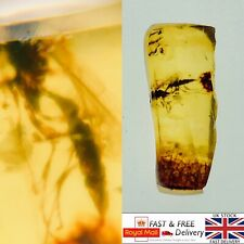 More details for large wasp and leaf in cretaceous burmese amber fossil with 3d frame 0.43g *528