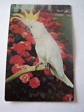 Surrey Real Photographic (RP) Collectable Animal Postcards
