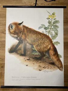 Fuchs  Rollkarte Schulwandkarte 50 cm x 70 cm