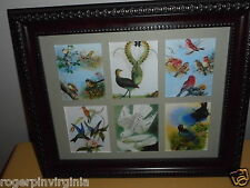 BIRDS OF PARADISE  -  6 MINIATURE PICTURES IN A FRAME