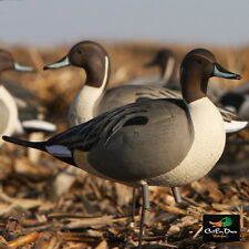 AVERY GREENHEAD GEAR GHG FULL BODY PINTAIL DUCK DECOYS 4 DRAKES