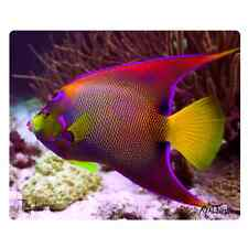 """Realfish H20 Series """"Angel Fish"""" Tempered Glass Cutting Board, Made in USA 12x15"""