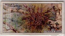 Witches Broom Plant Branch Deformity 80+ Y/O Ad Trade Card