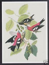 WHITE-WINGED CROSSBILL John James Audubon Art ARTWORK PAINTING MODERN POSTCARD