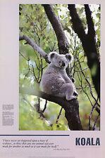 Poster :Animals: Bears: Koala In Tree - Free Shipping - #1938 Lc14 i
