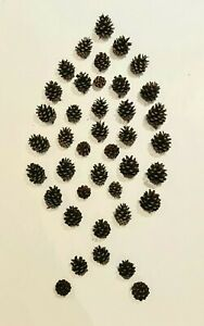 100 Small Pine Fir Cones Pinecone Crafts Christmas Wreath Wedding Table 2-4cm UK