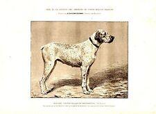 GRAVURE SUR BOIS DE MALHER 19ème CHIENNE BRAQUE DU BOURBONNAIS A M. LAFOSSE