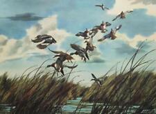 Bruce Lattig Amer Mallard Ducks Hunting Large Vintage Oversize Lithograph #S295