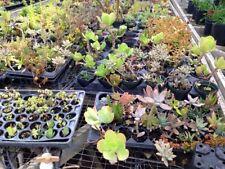 New listing 30 Succulent Cuttings 15 Varieties Tiny Mini Fairy Garden Wedding Favors