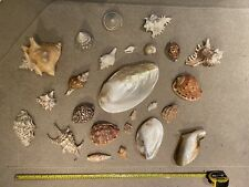 More details for collection of vintage sea shells
