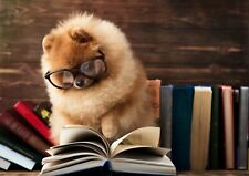 A3  Book Worm Dog Poster Size A3 Puppy Pomeranian Chow Chow Poster Gift #14640