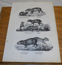 1834 Antique Print///PIG, PICA, POKE///6 Illustrations
