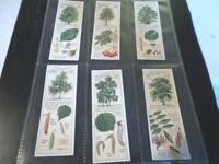 1937 Typhoo Tea COUNTRYSIDE TREES Full Trade set 25 cards like tobacco