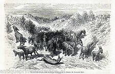 Antique print Aranjuez Madrid Spain / donkey / donkeys 1869