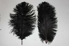 "Ten (10) black first grade selected drabs ostrich feather 270-320 mm (11-13"")"