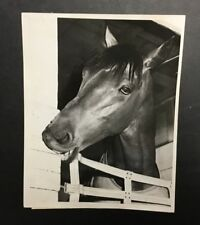 Original Seabiscuit 1938 Press Wire Photo Horse Race War Admiral Chewing Rare