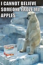 Funny Polor Bear Who Froze My Apples FRIDGE MAGNET (2 x 3 inches)(AA)