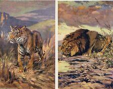 More details for set 6 edgar h fisher animals tiger lion polar bear pcs unused a & c black  am222